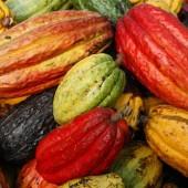 El Ceibo chocolate Bolivia